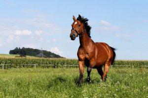 الحصان في المنام و تفسير معني ركوب الخيل في الحلم لإبن سيرين