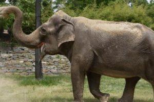 معلومات عن فيل افريقيا للأطفال مكتوبة بشكل مبسط ومسلي