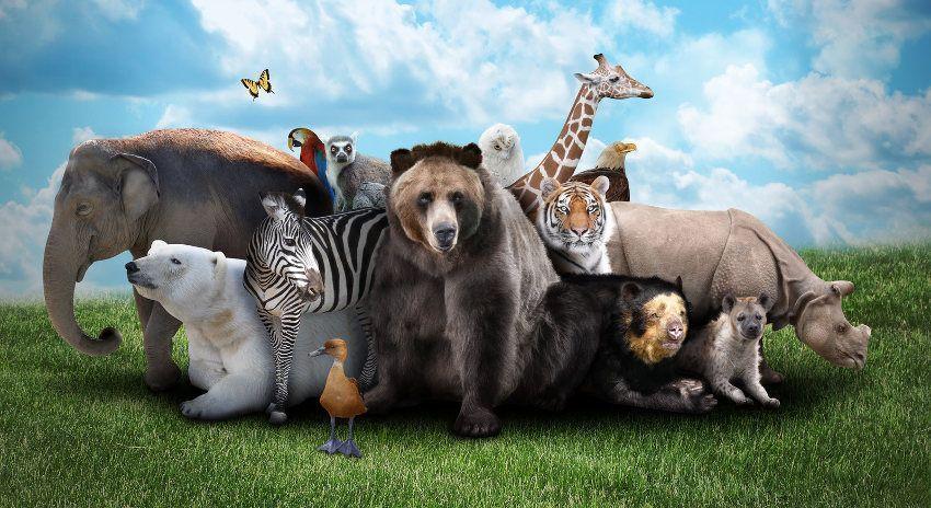 قطيع من حيواناات الغابة