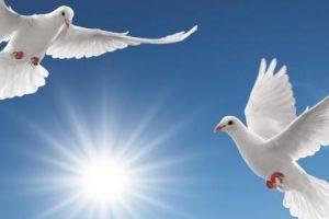 بحث عن السلام العالمي ومنافعه للفرد والمجتمع مقدمة وخاتمة