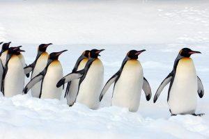 هل تعلم معلومات مفيدة وقصيرة عن البطريق تعرفها لأول مرة