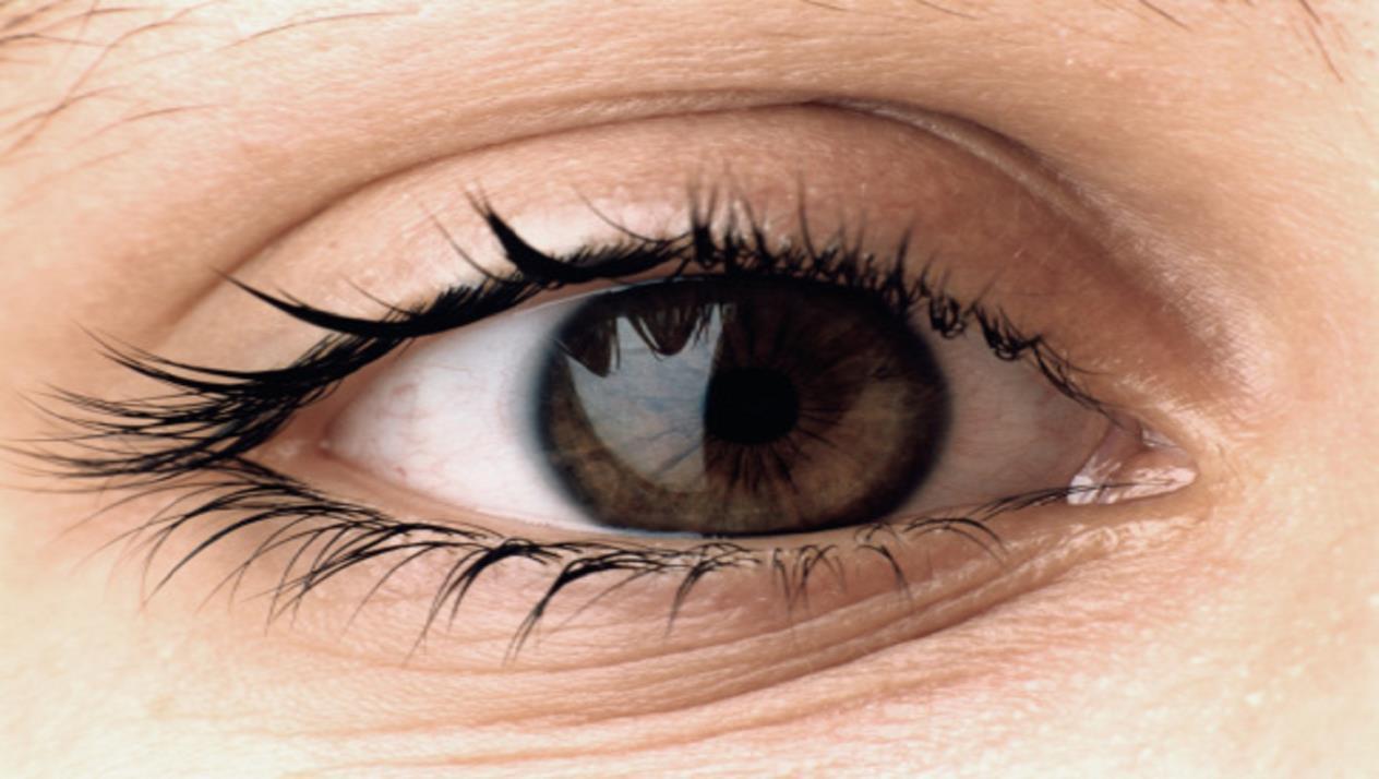 بحث عن العين
