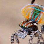 معلومة عامة مفيدة عن العنكبوت ودورة حياته