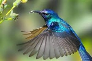 معلومات مفيدة وغريبة عن الطائر الطنان ومهاراته المدهشة