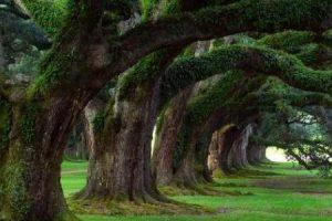 تعريف الطبيعة وكيفية التعامل معها والحفاظ عليها