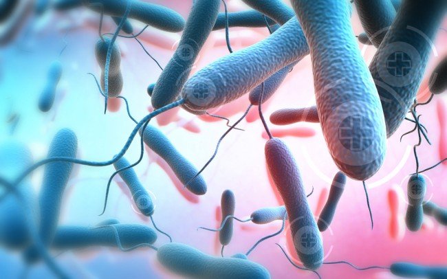 الكوليرا تعريفها وعلاجها وتاريخها