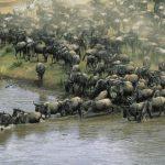 هل تعلم الحيوانات لماذا تهاجر ؟ اسرار هجرة الكائنات معلومات مدهشة تعرفها لاول مرة