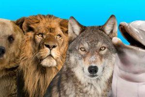 معلومة جديدة ومفيدة عن انقراض الحيوانات والطيور واسبابه