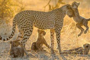 اريد هل تعلم عن الحيوانات ورعايتها لصغارها معلومات مشوقة ومسلية عن عالم الحيوان