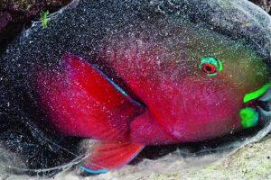 معلومات مفيدة للاطفال وللكبار ايضاً عن الكائنات البحرية العجيبة