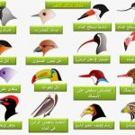 معلومات عامة عن الحيوانات هل تعلم عن منقار الطيور واهميته الفائقة