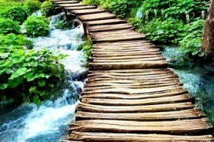 تعريف الطبيعة ومكونات الطبيعة الحية وغير الحية