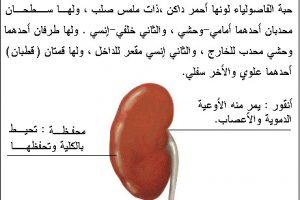 معلومات حول جسم الانسان معلومات قيمة ومفيدة جداً