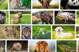 اسئلة هل تعلم | معلومات مفيدة ومتنوعة عن الحيوانات
