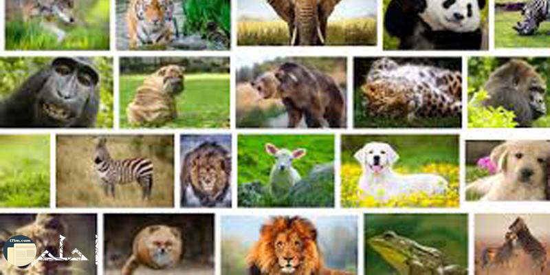 اسئلة هل تعلم معلومات مفيدة عن الحيوانات