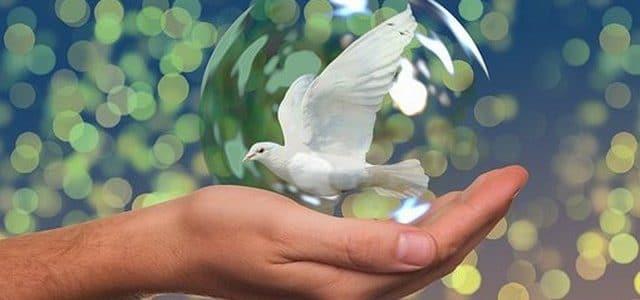 كلمات جميلة عن السلام