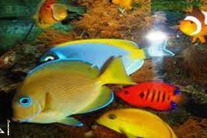 معلومات غريبة جدا ومفيدة جدا جدا | غرائب وعجائب الأسماك