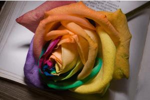 اشعار عن الحب قصيرة اجمل 10 قصائد عن الغرام والرومانسية