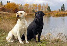 الحلم بهجوم الكلاب