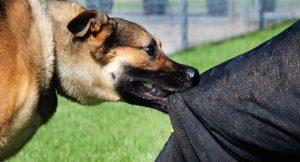 تفسير حلم هجوم الكلاب بالوانها المختلفة و دلالات هذا الحلم