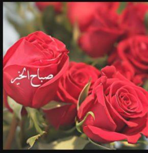 صباح الخير حبيبتي الغالية اجمل كلمات الى اغلى انسانة في حياتي