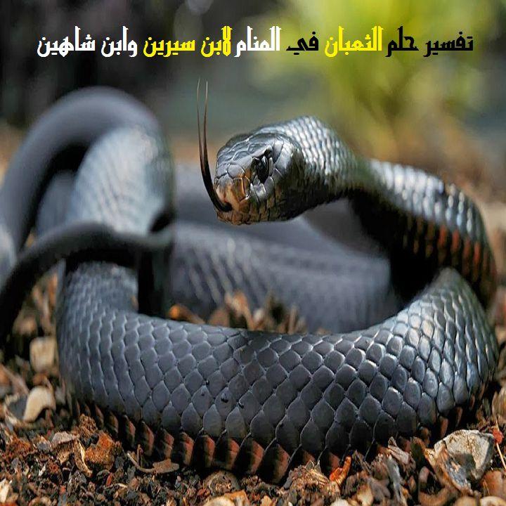 تفسير حلم قتل الثعابين وتقطيعهم للرجل والمرأة لابن سيرين