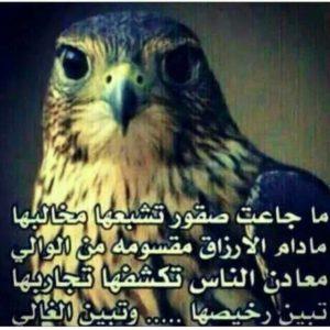 بيت شعر حكمه شعبي 6