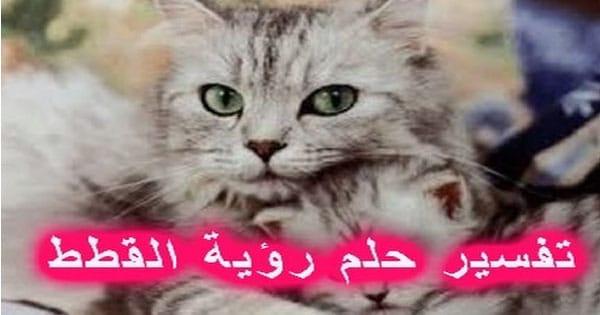 تفسير حلم القطط الكثيرة للشباب والمرأة الحامل والمتزوجة