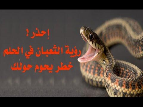تفسير حلم الثعابين الكثيرة في المنام للأئمة التفسير