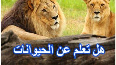 هل تعلم عن الانسان والحيوان