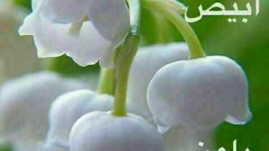 صباح أبيض بلون قلوبكم