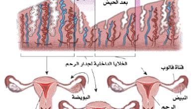 معلومات عن الدورة الشهرية