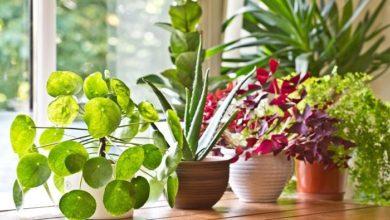 هل تعلم عن النباتات