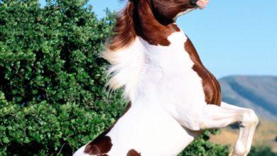 صورة حصان