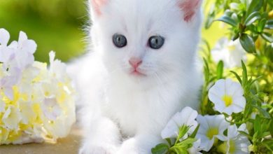 صورة قطة