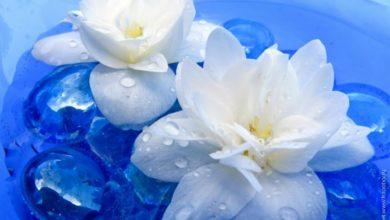 صورة ورد أبيض
