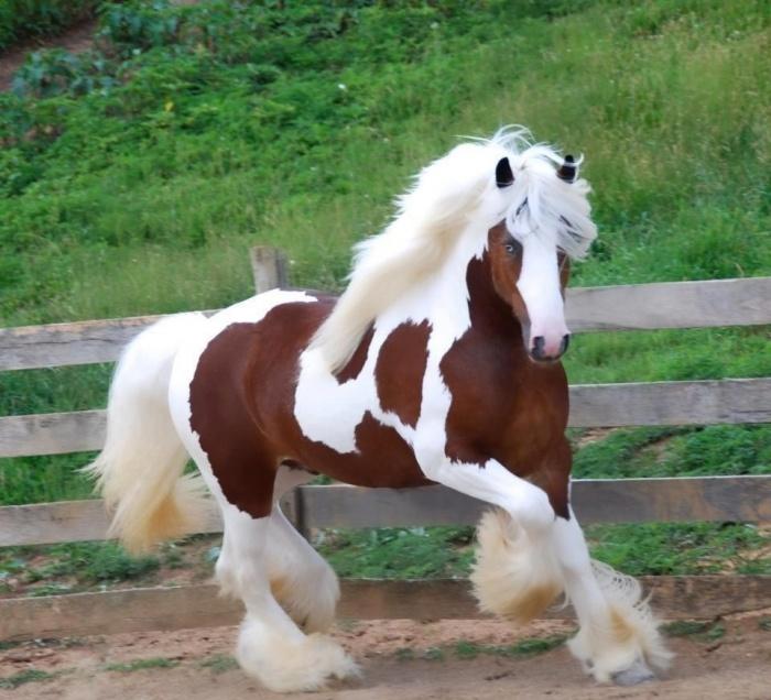 صورة لحصان ملون