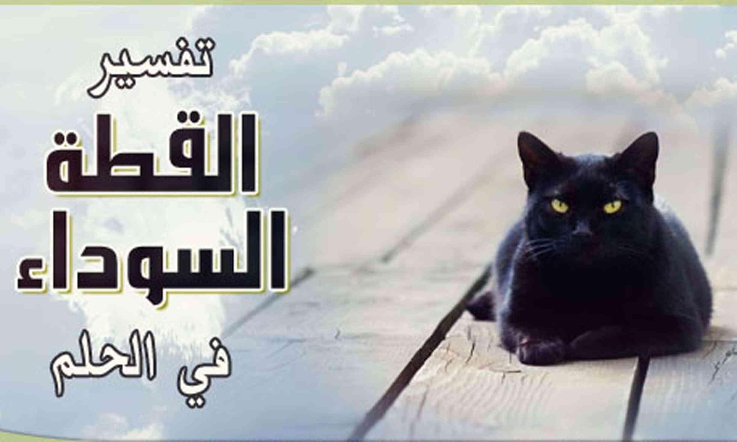 رؤية القط الأسود في المنام