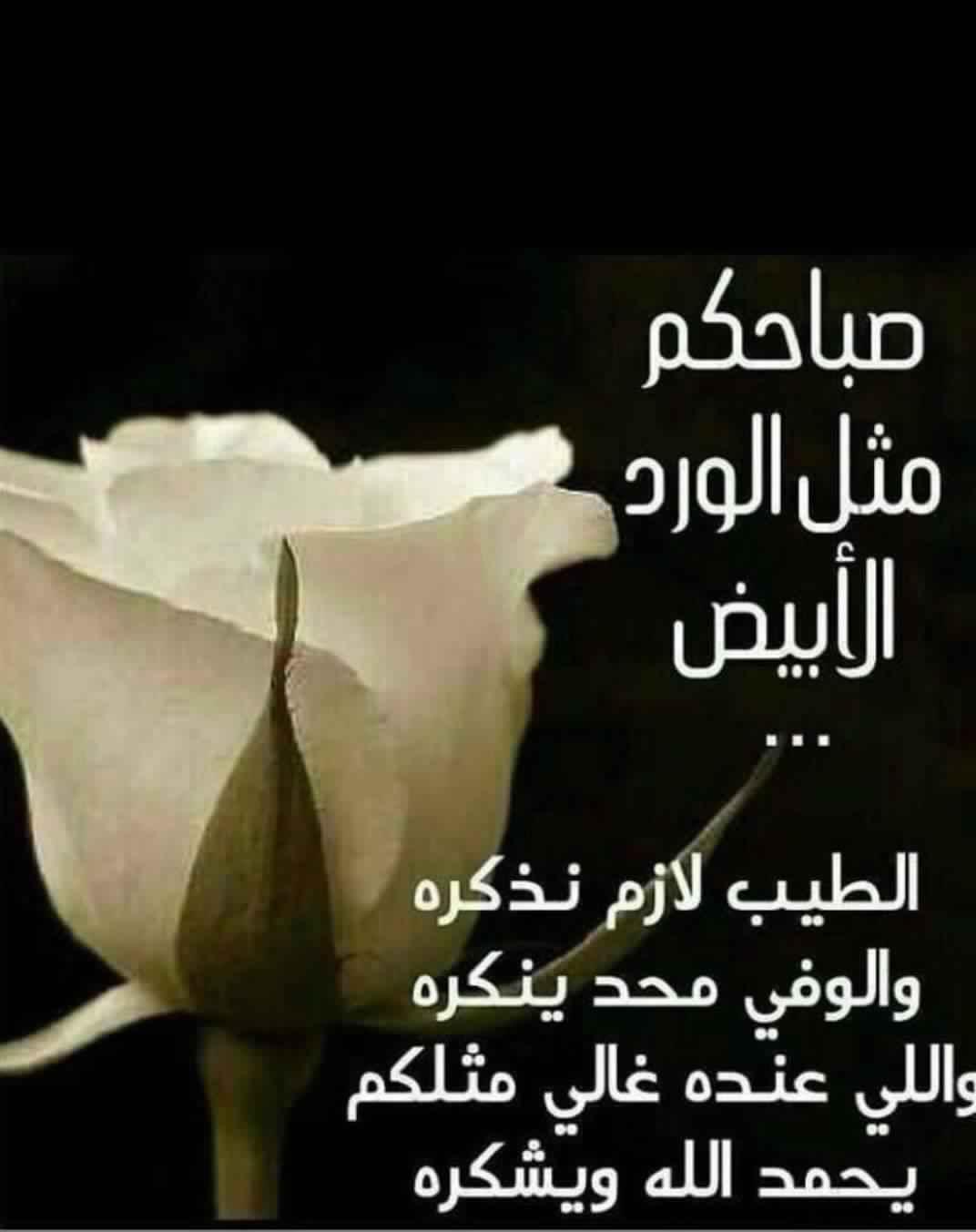 صباحكم مثل الورد الأبيض