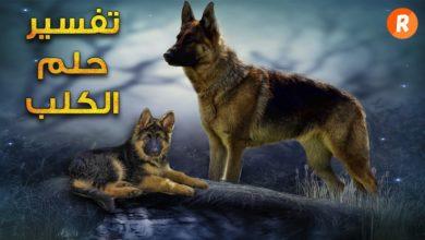 رؤية الكلاب في المنام