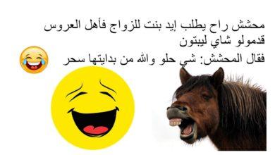 مسطول راح يطلب إيد بنت