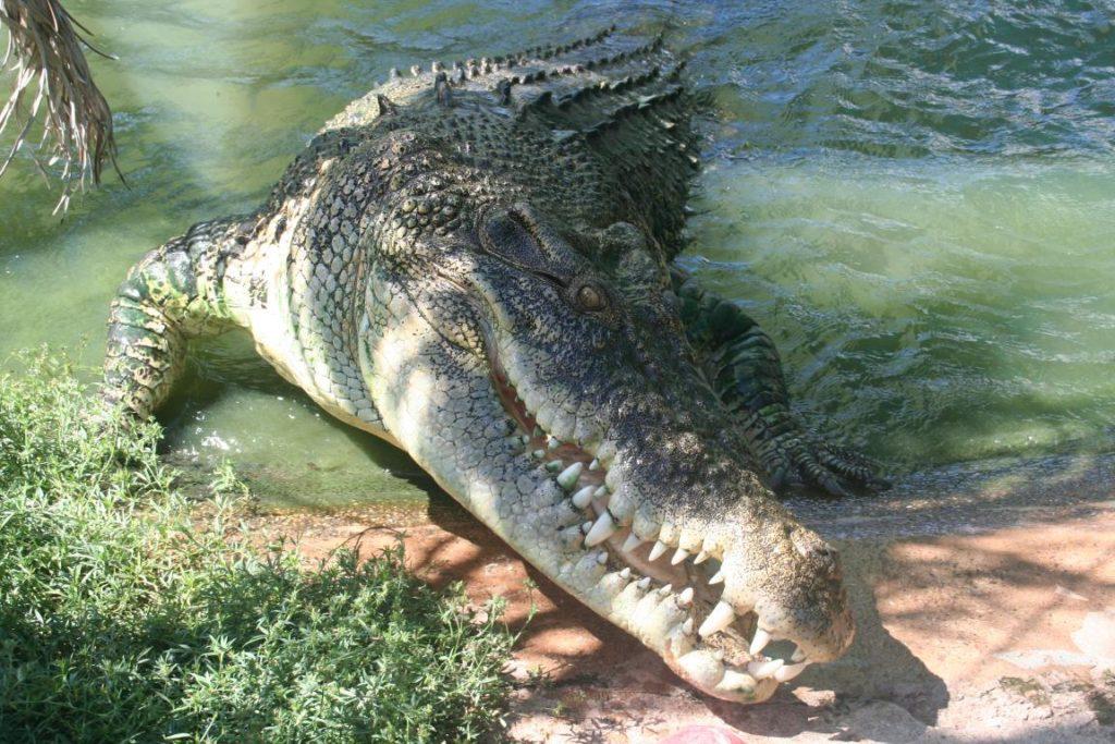 التمساح لديه حواس قوية جدا كما ان لديه القدرة على الرؤية في الليل
