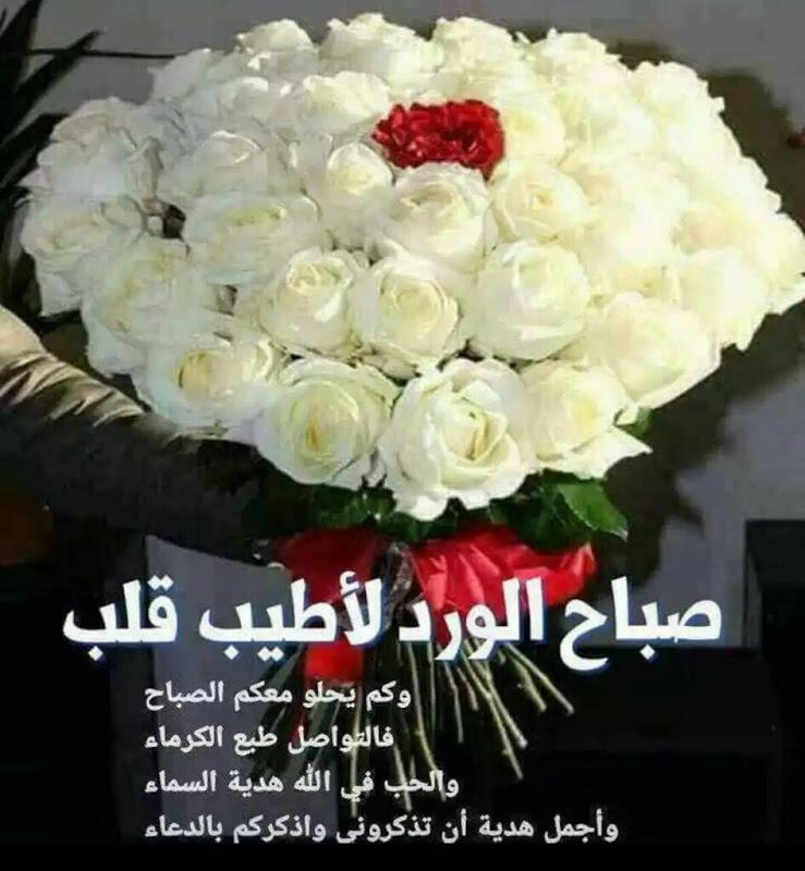 حوته حياة كتبي No Twitter صباح 0