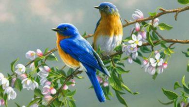 صورة لعصافير ملونة فوق الشجرة
