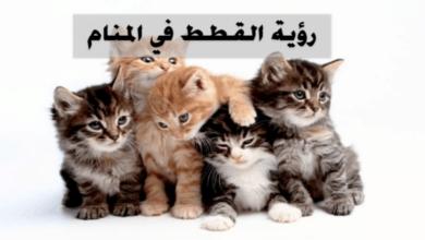 صورة لمجموعة قطط ملونة