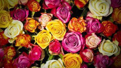 صباح الورد يا عمري