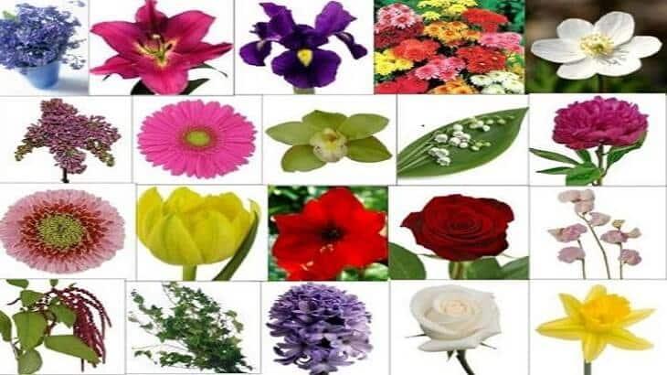 انواع الورد و الورود النادرة واجمل ابيات الشعر عن الورود