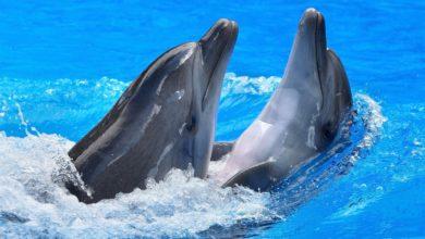 كيف تتنفس الدلافين