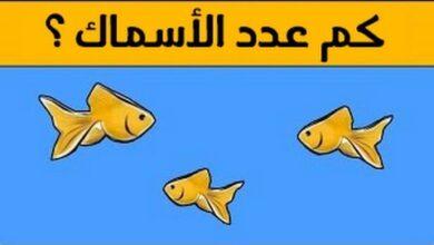 كم عدد السمك