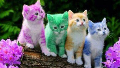 احلى القطط